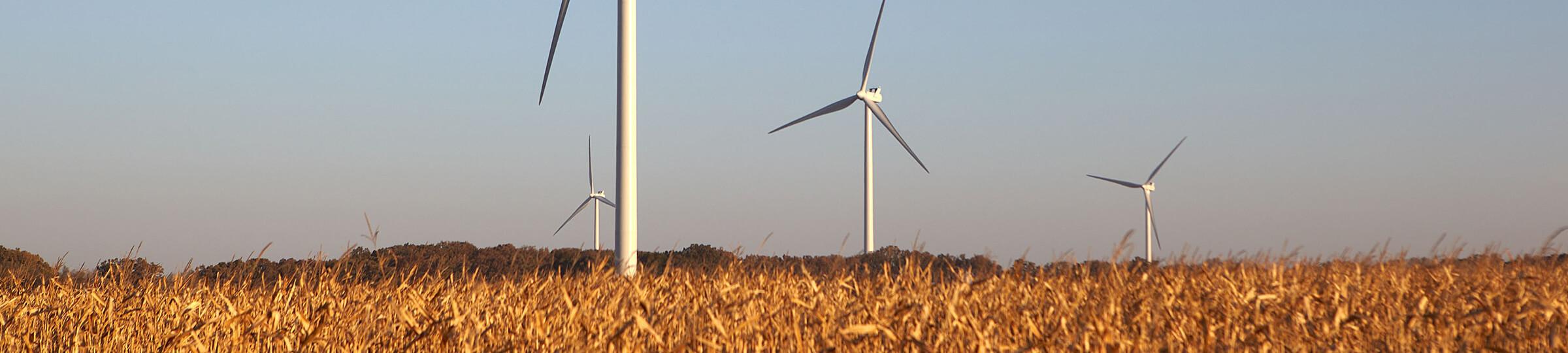 wind farm in field with blue sky