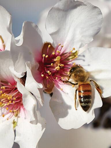 Bee Pollinator Flower