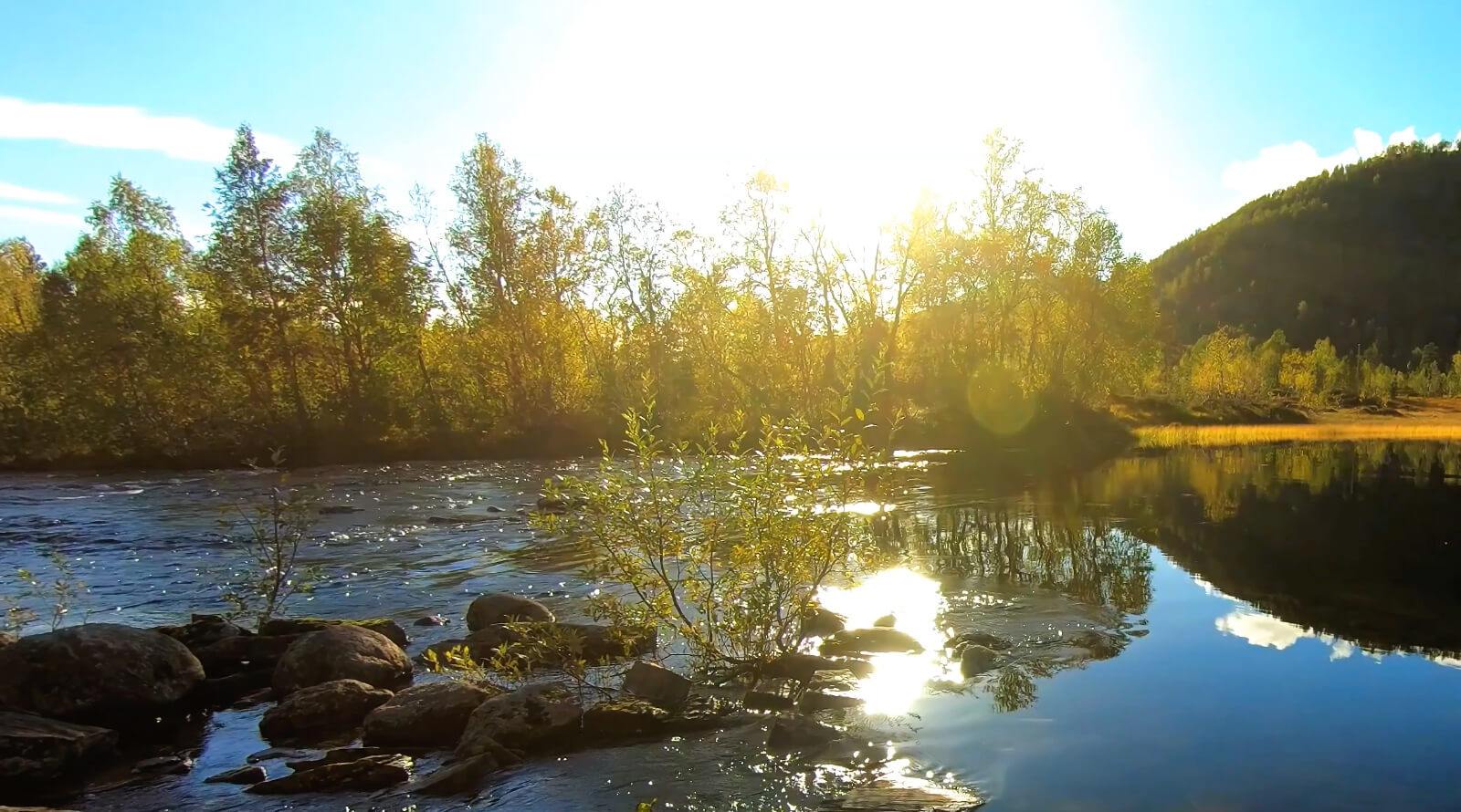 stream with rocks and trees at sunrise
