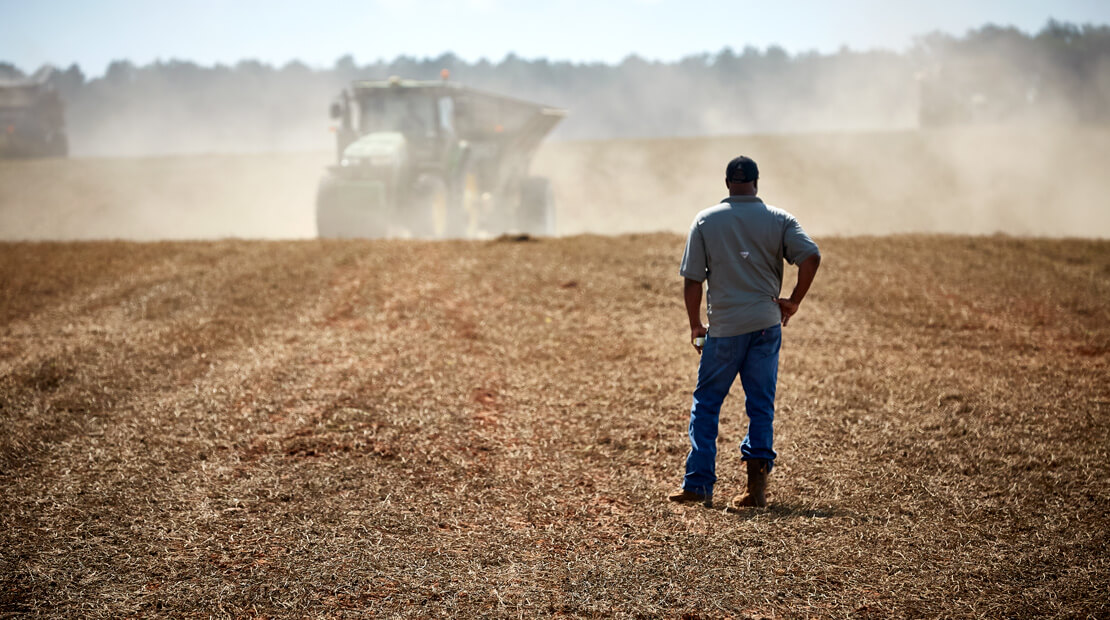 A farmer looks favorably upon his peanut field being harvested